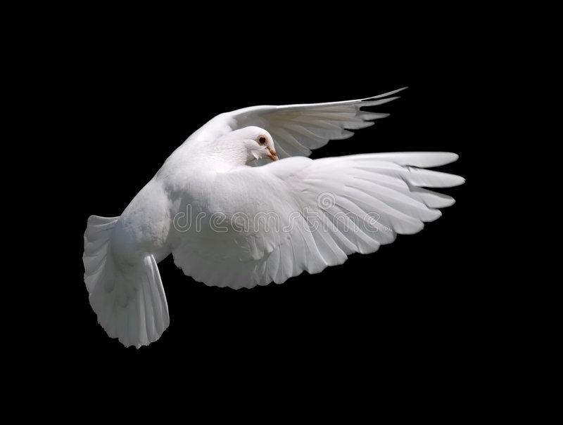 زندگی در روح القدس به چه معناست؟